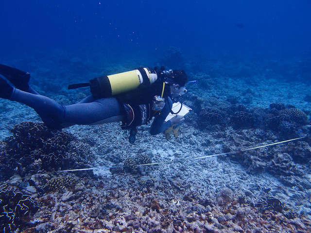 Scientist Nick Graham does a fish count, British Indian Ocean Territory